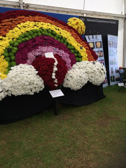 National Chrysanthemum Society display