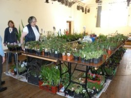 May plant sale c