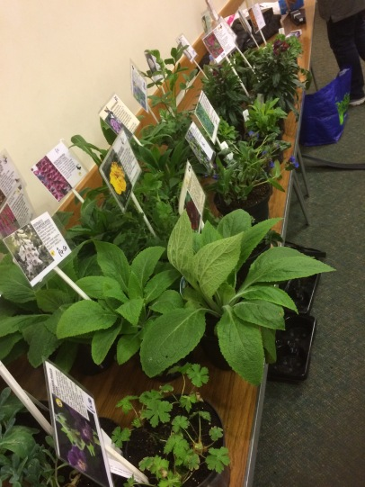Mayfield Plants sale table
