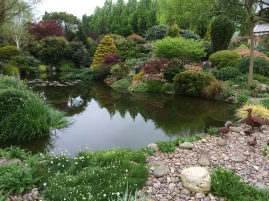 johns-garden-ashwood-use-of-conifers