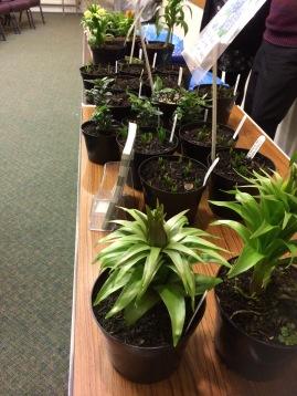 Village Plants sales table 2