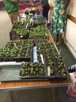 Oct plant sale