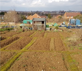 allotment winter