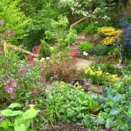 Jackie's garden