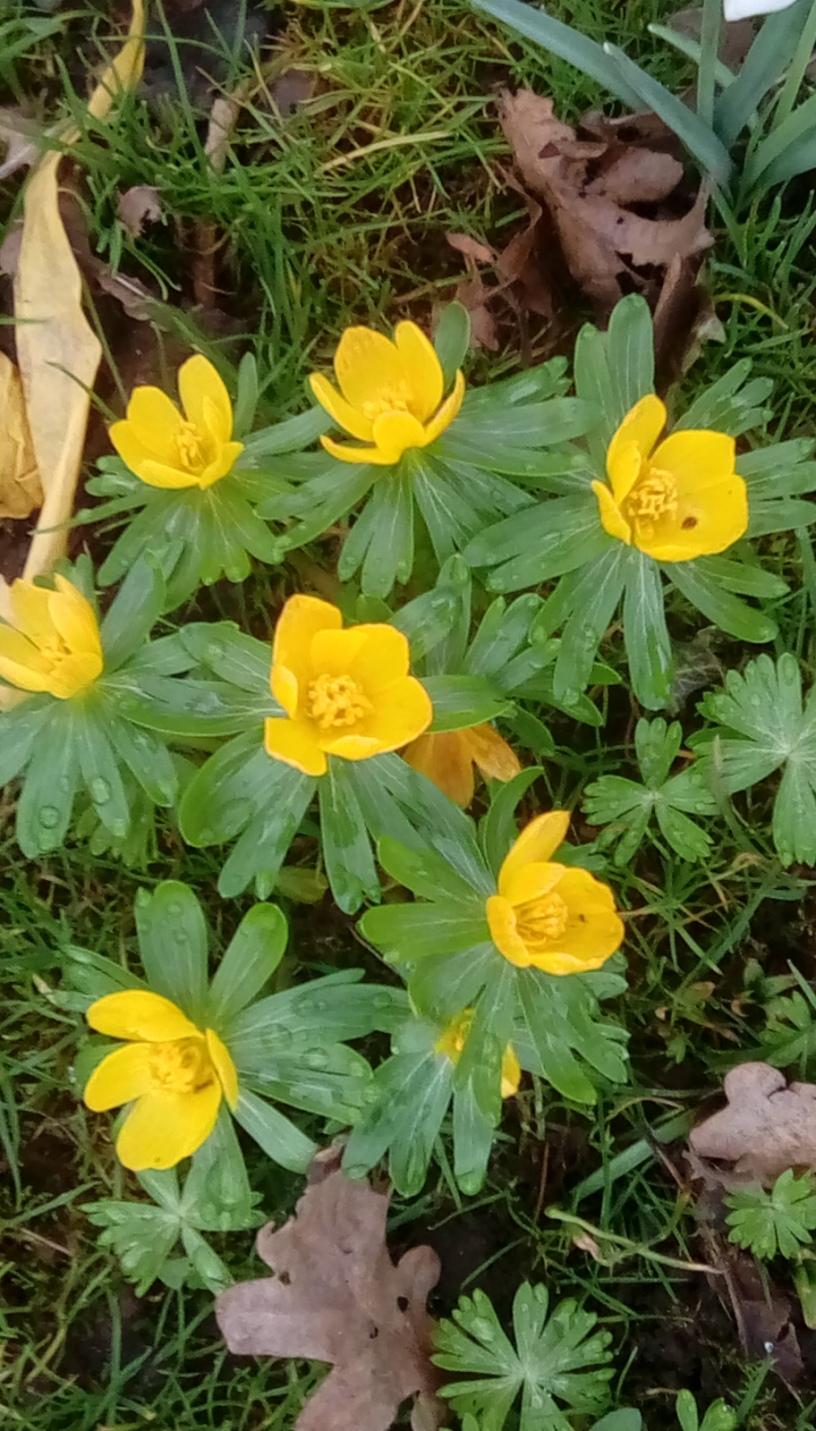 Becky's garden 2